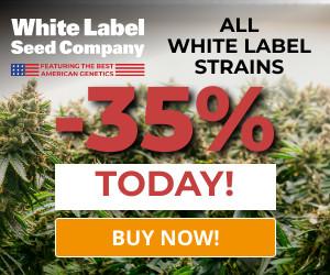 Blog-Cannabis